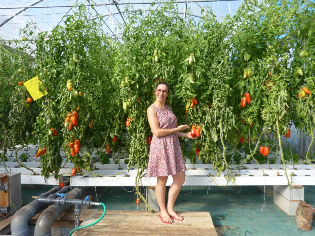 Marion nous présente ses tomates en hydroponie